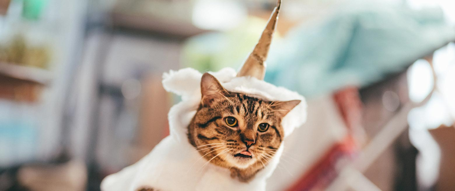 The mythical striped cat in unicorn costume